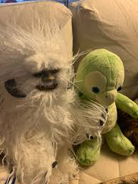 """wendi freeman on Twitter: """"I am enjoying everyone's Animal Crossing  experiences. Since I don't own a video game thingy I am playing it live  action with Barnabas Wampa and Olu.… https://t.co/Azav7uHcrz"""""""
