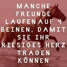 Bildergebnis Für Pferde Sprüche Freundschaft Sprüche Pferde