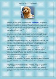 Labradoodle Designer Dogs What The Heck Is A Labradoodle By Asunshinelabradoodle Issuu