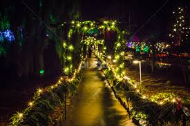 Christmas in the Garden | Christmas | Public Holidays | Pixoto
