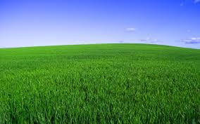Hitman Grass Field Green Sky Horizon Landscapes 1456464jpg Little