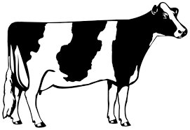 dairy cow silhouette. Plain Silhouette Holstein Intended Dairy Cow Silhouette C