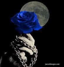 ผลาร้นหารูปภาพสำหรับ blue rose