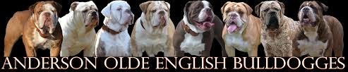 olde english bulldogges