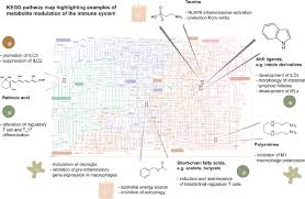 Metabolic Pathways Chart Chart Of Metabolic Pathways With Highlighted Examples Of