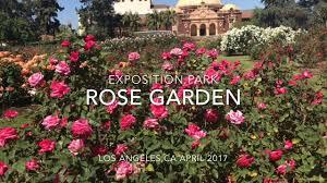 exposition park rose garden in los angeles vlog 042917