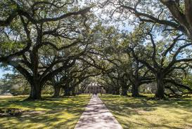 3 days in new orleans itinerary oak alley plantation