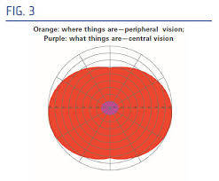 Peripheral Awareness Chart Lesson Understanding Prism Designs For Homonymous Hemianopsia