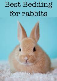 safe bedding for rabbits