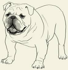 Small Picture How to draw Bulldog Learn to draw an English Bulldog step by step