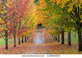 Fall Images Free Trees In Fall Free Stock Photo Iso Republic
