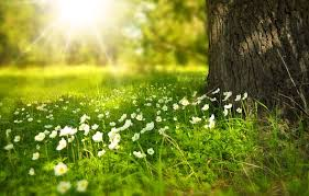 Free Spring Spring Images Pixabay Download Free Pictures