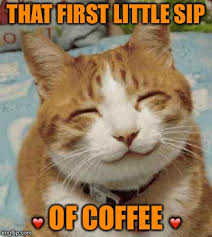 Image result for funny cats