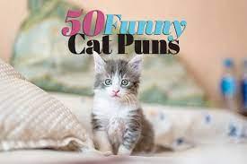 50 cat puns purr fectly funny pet puns