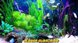 Aquarium Background Hd Under Fontanacountryinn Com