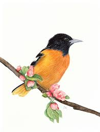 blackbird painting bird painting robin painting