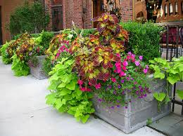 Small Picture Annual flower pots add bright colors and lush greens to enhance