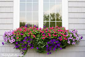 Buy stunning flowers from interflora. Window Box Tips My Former Black Thumb The Lilypad Cottage