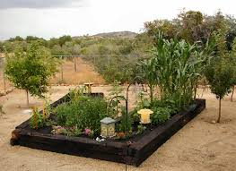 Small Picture Raised Vegetable Garden Fruit Orchard In Yarnell Arizona