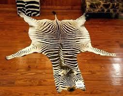 zebra hide rug a grade zebra skin rug trophy room collection zebra hide rug uk