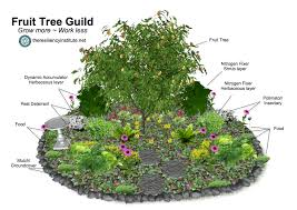 Whatu0027s The Best Way To Plant A Fruit Tree  Marin Master GardenersPlanting A Fruit Tree