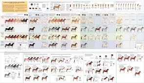 Foal Color Chart Mfthba Youth