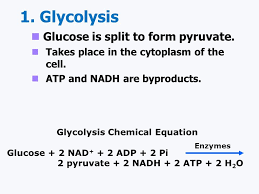 the overall simplified chemical equation for cellular respiration