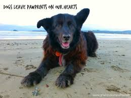 Loss Of A Pet Quote 100 Comforting Loss of a Pet Quotes 55