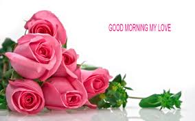 good morning rose wallpapers free love wallpapers