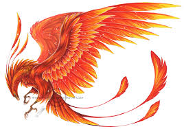 Image result for realistic phoenix drawing