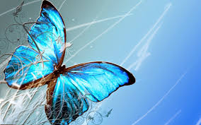 colorful butterfly wallpapers. Brilliant Colorful For Colorful Butterfly Wallpapers