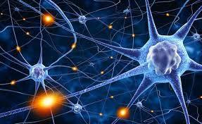Así descubrimos qué pasa en las neuronas de las personas con autismo | El  Comercio