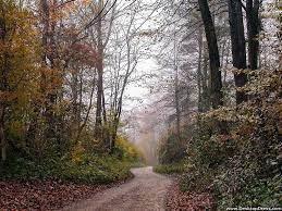 Natural Backgrounds » Jungle Road ...