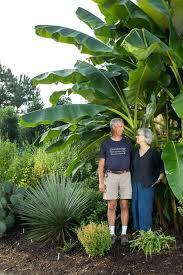 garden delights nursery in the garden with tony in garden delights plant nursery garden