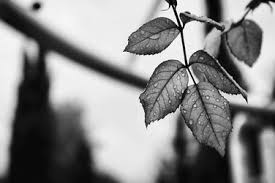 Image result for black and white images