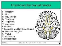 Cranial Nerve Exam Chart Continuation Of Cranial Nerve Exam