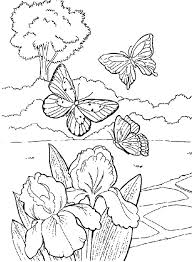 Small Picture Beautiful Butterfly In The Garden Coloring Pages coloring 3