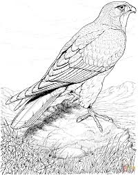 Http Colorings Co Hawk Coloring Pages