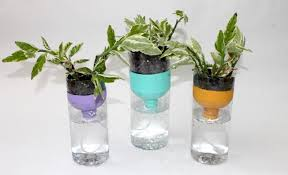plastic bottles converted into a self watering pot