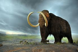 de extinction who how when and why mammoth de extinction