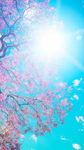 Cherry blossom wallpaper iphone ...