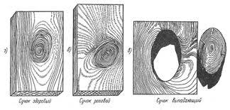 Пороки древесины пороки формы обработки грибные поражения  сучок роговой здоровый выпадающий