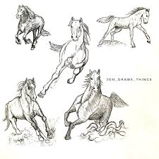 horse anatomy coloring book refrence horse dynamic pose reference drawing reference
