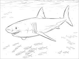 It develops fine motor skills, thinking, and fantasy. Shark Coloring Pages Coloringbay