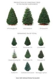 16 Types Of Christmas Trees  ProFlowersWhat Kind Of Christmas Trees Are There