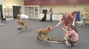 Fun Business Games Trainer Offers Unique Fun Classes For Dogs Business