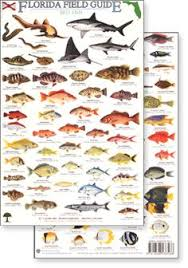 florida fish chart fl fish identification related keywords suggestions fl fish