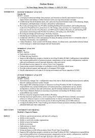 Workday Analyst Resume Samples Velvet Jobs