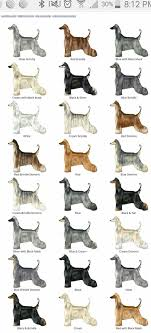 Brindle Color Chart Afghan Hound Color Chart Afghan Hound Longhaired