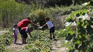 community gardening. Start A New Community Garden Gardening